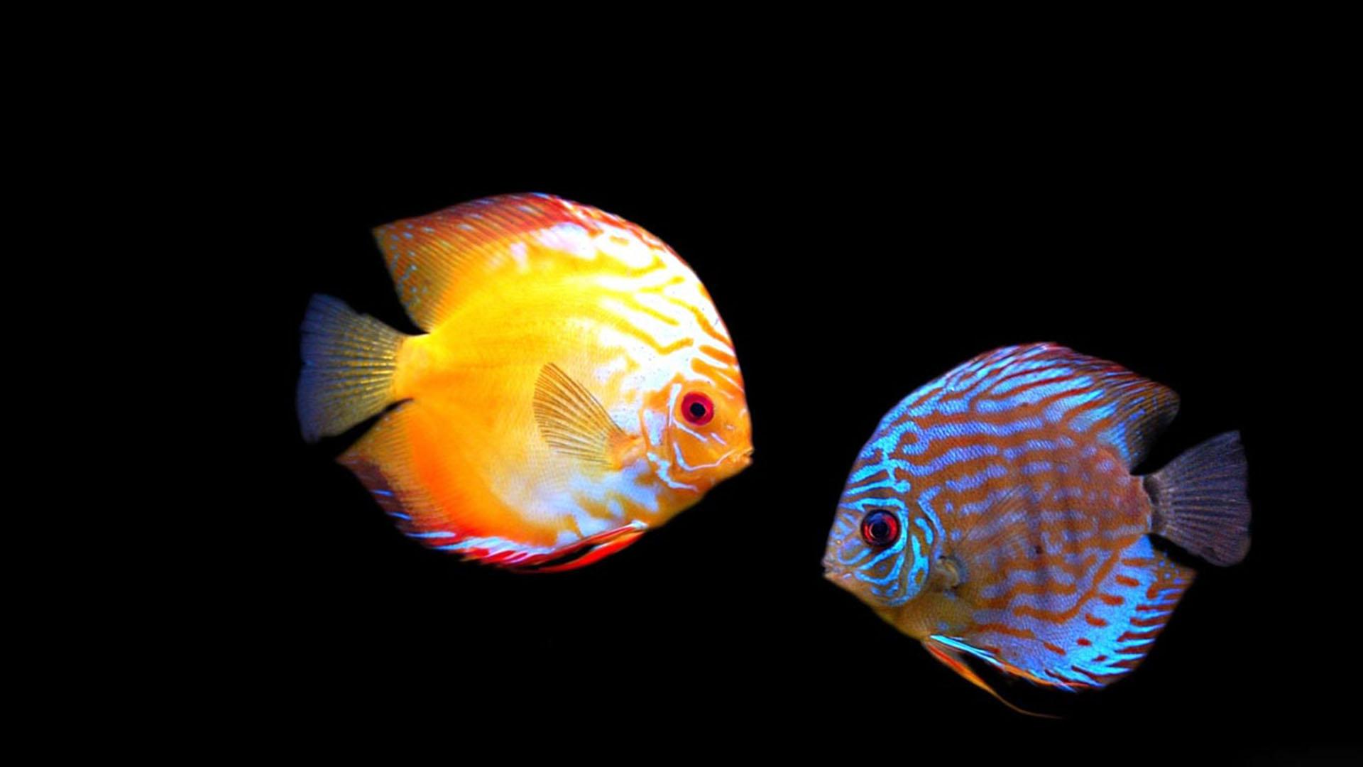 fond d ecran aquarium